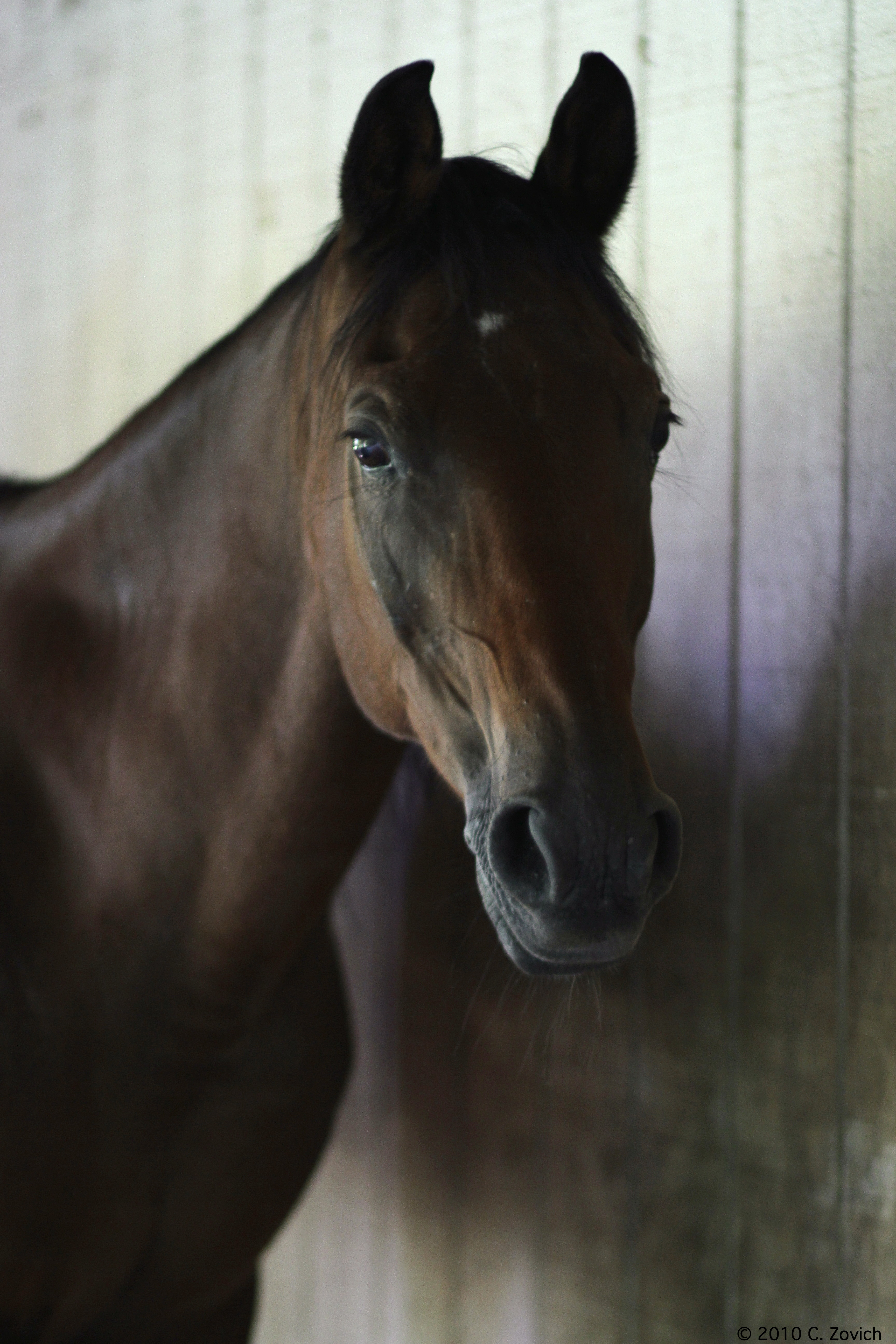 horse front face